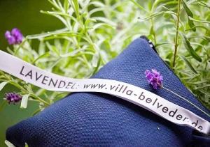 Lavendel aus der Villa Belveder